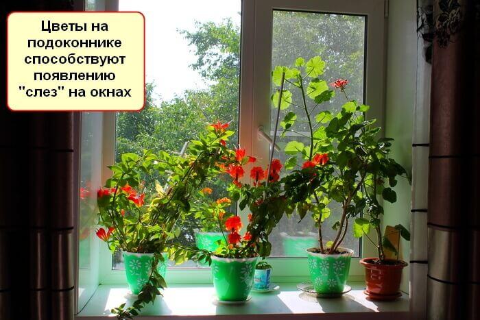 Что сделать чтобы окна не запотевали дома