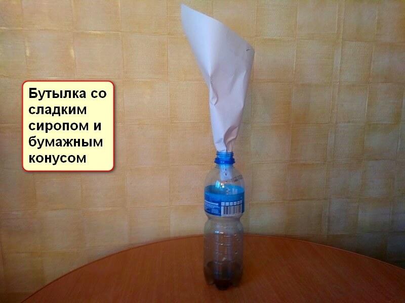 Как избавиться от мушки дрозофилы в квартире