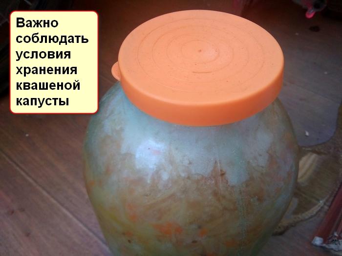 Можно ли заморозить квашеную капусту