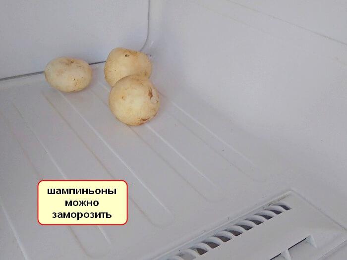 Срок годности шампиньонов в холодильнике